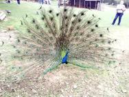 Природа Частный контактный зоопарк под Подгорицей