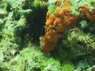 Активный отдых Дайвинг Donkova seka (подводная скала)