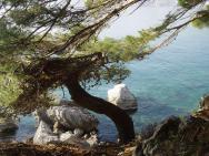 Пляж Ratac (Ратац, скалистый)